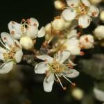 La Endrina y la Cosmética Natural