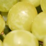 NaturalSensia te ayuda a tus propósitos para el 2011