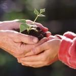 Conservar y cuidar los productos de Cosmética natural