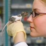 Experimentación animal en cosmética