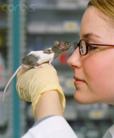 Young woman holding mouse with rubber glove in laboratory