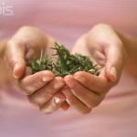 La Aromacosmética Los aceites esenciales