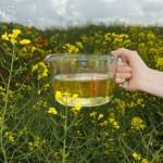 Aromacosmética: Aceites vegetales