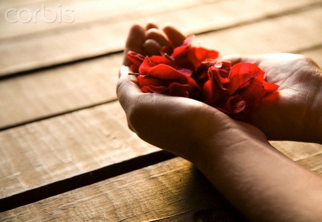 Close up of woman's hands holding red petals
