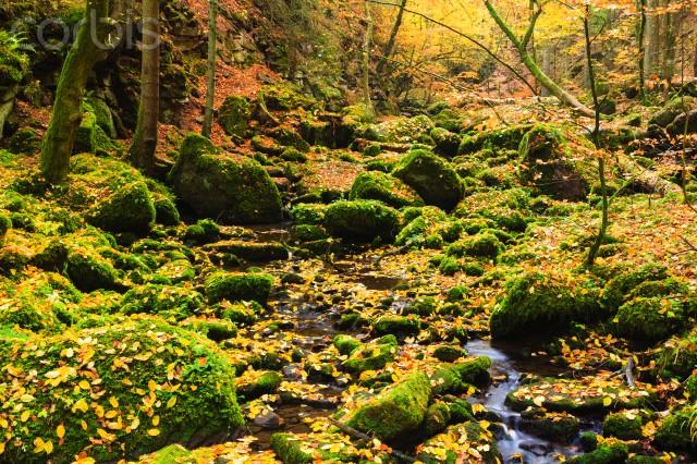 Dulkamara y otoño