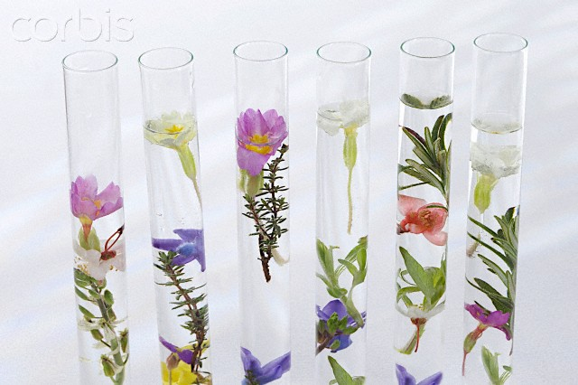 Cosmética natural y aceites esenciales CHASSENET