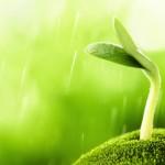 Pon una semilla con cosmética natural